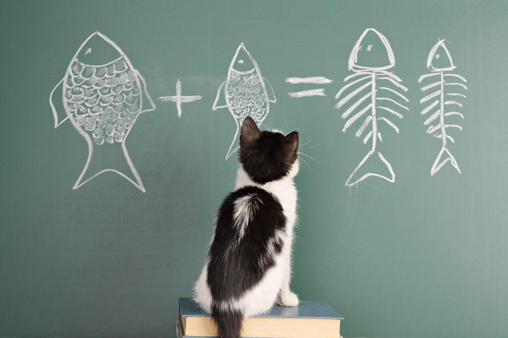 経理担当者に求められる管理会計の能力とは おすすめの資格も紹介